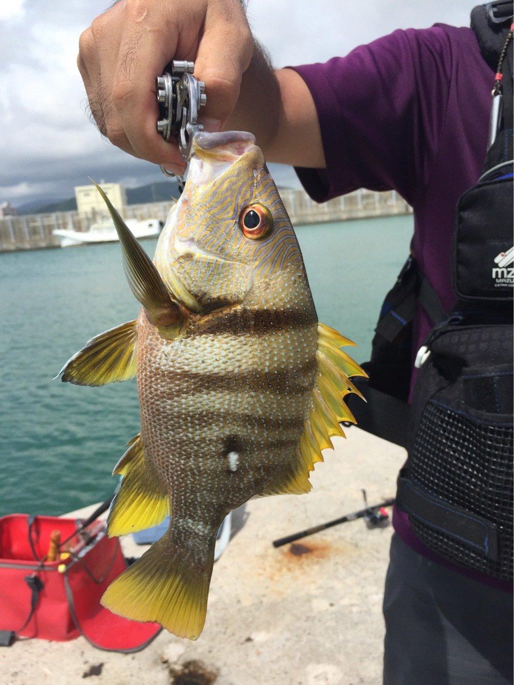 一平さんの投稿画像,写っている魚はナミフエダイ