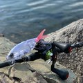 Kazuoさんの滋賀県彦根市での釣果写真