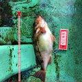 きよさんの宮城県岩沼市での釣果写真