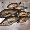 たいたいさんの山口県熊毛郡での釣果写真