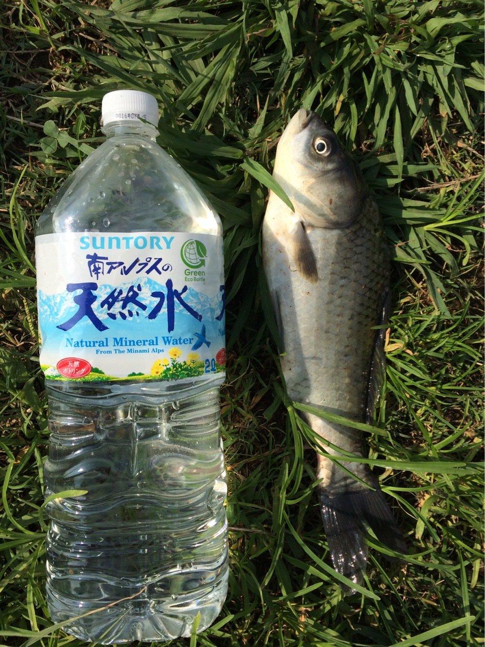 CIMAさんの投稿画像,写っている魚はギンブナ