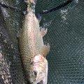 Minamisawaさんの山梨県での釣果写真