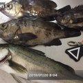 しーんさんの大阪府貝塚市での釣果写真