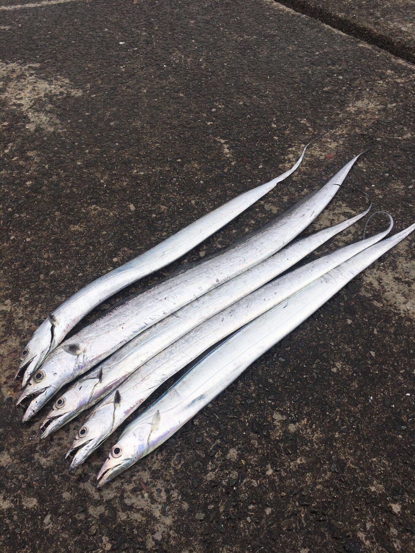 hidenoriさんの投稿画像,写っている魚はタチウオ