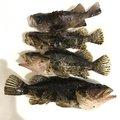 かずさんの石川県鹿島郡での釣果写真