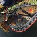 りーさんさんの福島県双葉郡での釣果写真