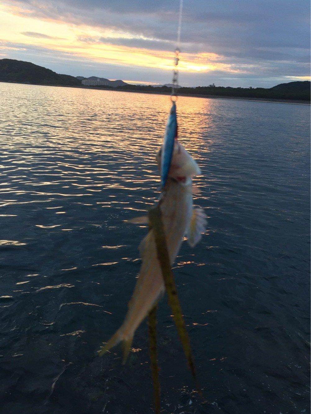 てつさんの投稿画像,写っている魚はエソ