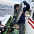 ぉのぶさんの和歌山県御坊市での釣果写真