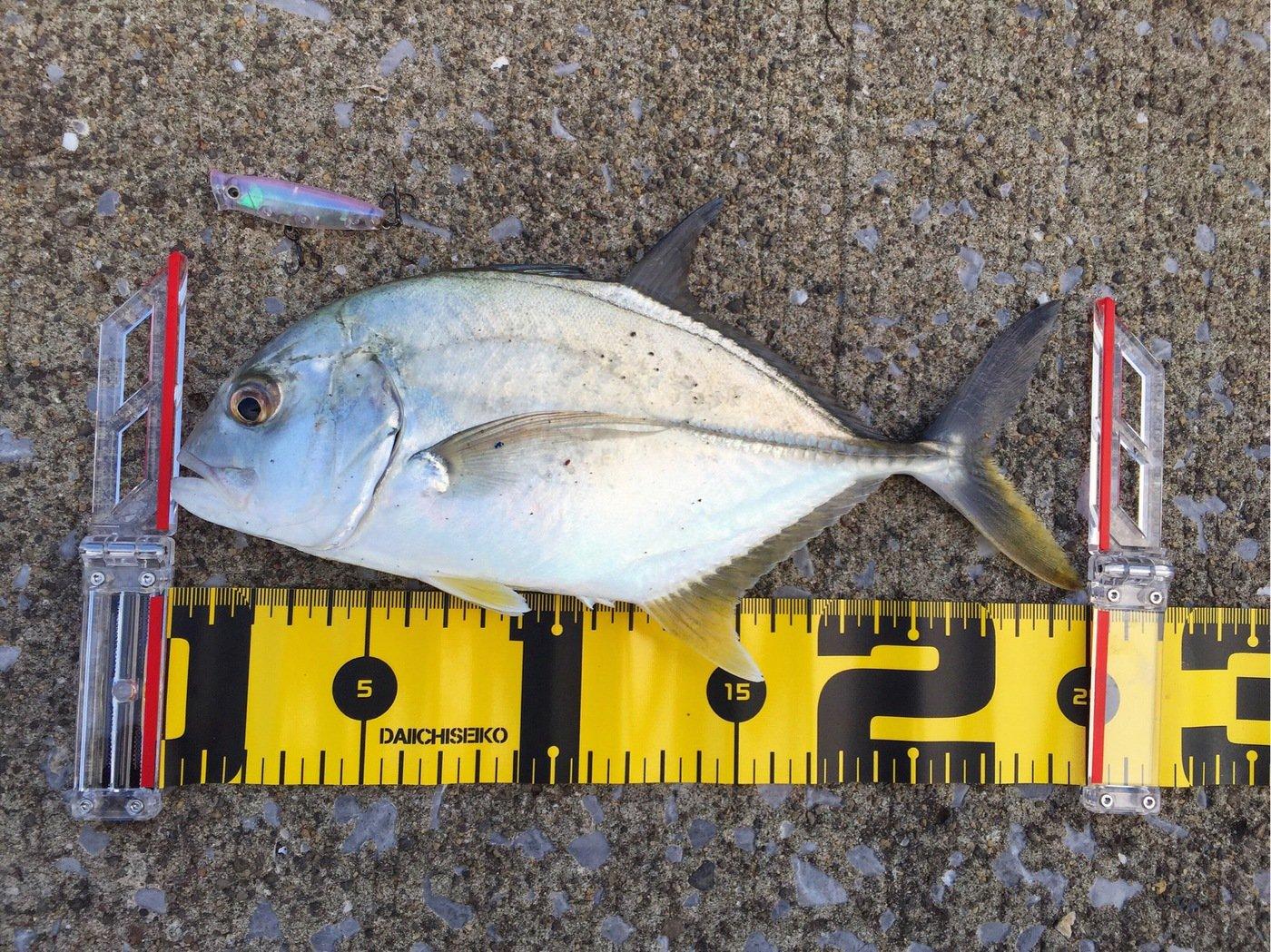 MSKさんの投稿画像,写っている魚はギンガメアジ