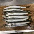たむさんの静岡県下田市での釣果写真