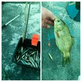 磯BOSE魂さんの北海道根室市での釣果写真