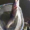 ノイトラさんの千葉県山武市での釣果写真