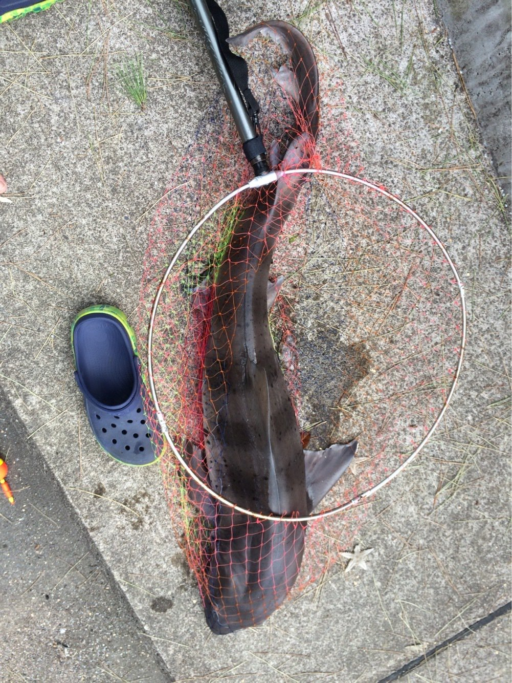 keiさんの投稿画像,写っている魚はドチザメ