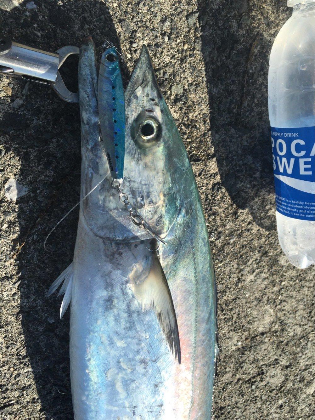 けんつむさんの投稿画像,写っている魚はサワラ