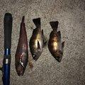 ドドリアさんさんの岩手県盛岡市での釣果写真