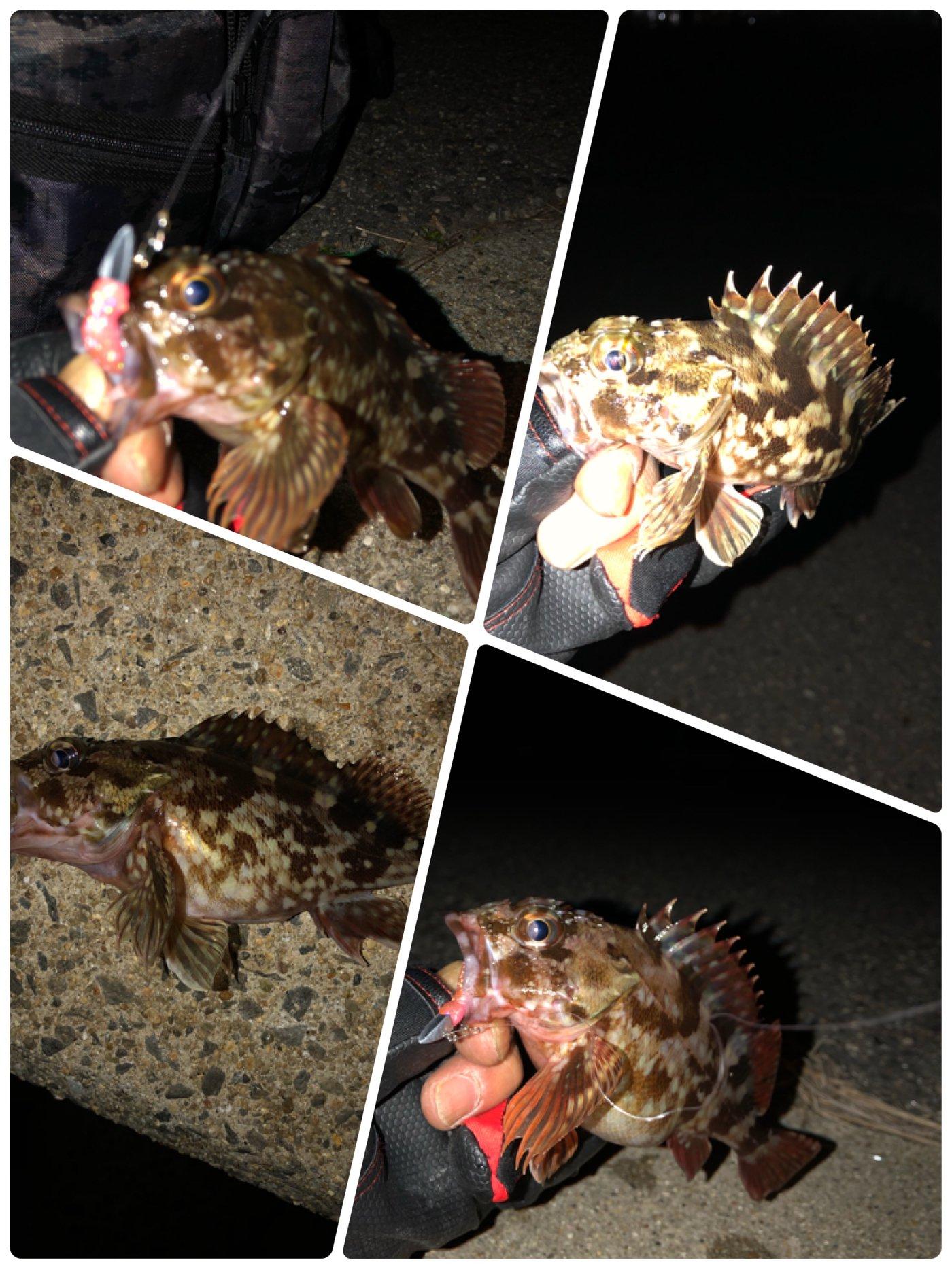 ポールさんの投稿画像,写っている魚はカサゴ,