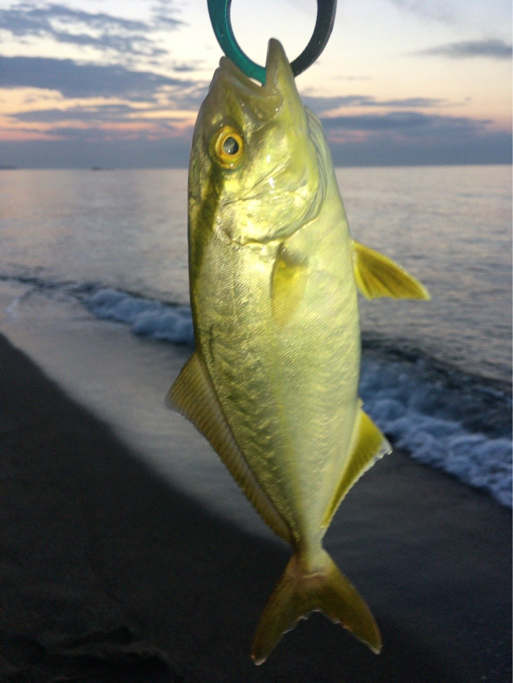 釣りでもしようさんの投稿画像,写っている魚はカンパチ