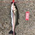 てるさんの千葉県千葉市での釣果写真
