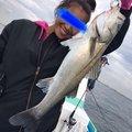 なぎさんの千葉県浦安市での釣果写真