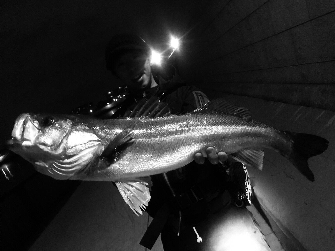 大地さんの投稿画像,写っている魚はスズキ