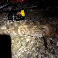 エクイップ2さんの青森県青森市での釣果写真
