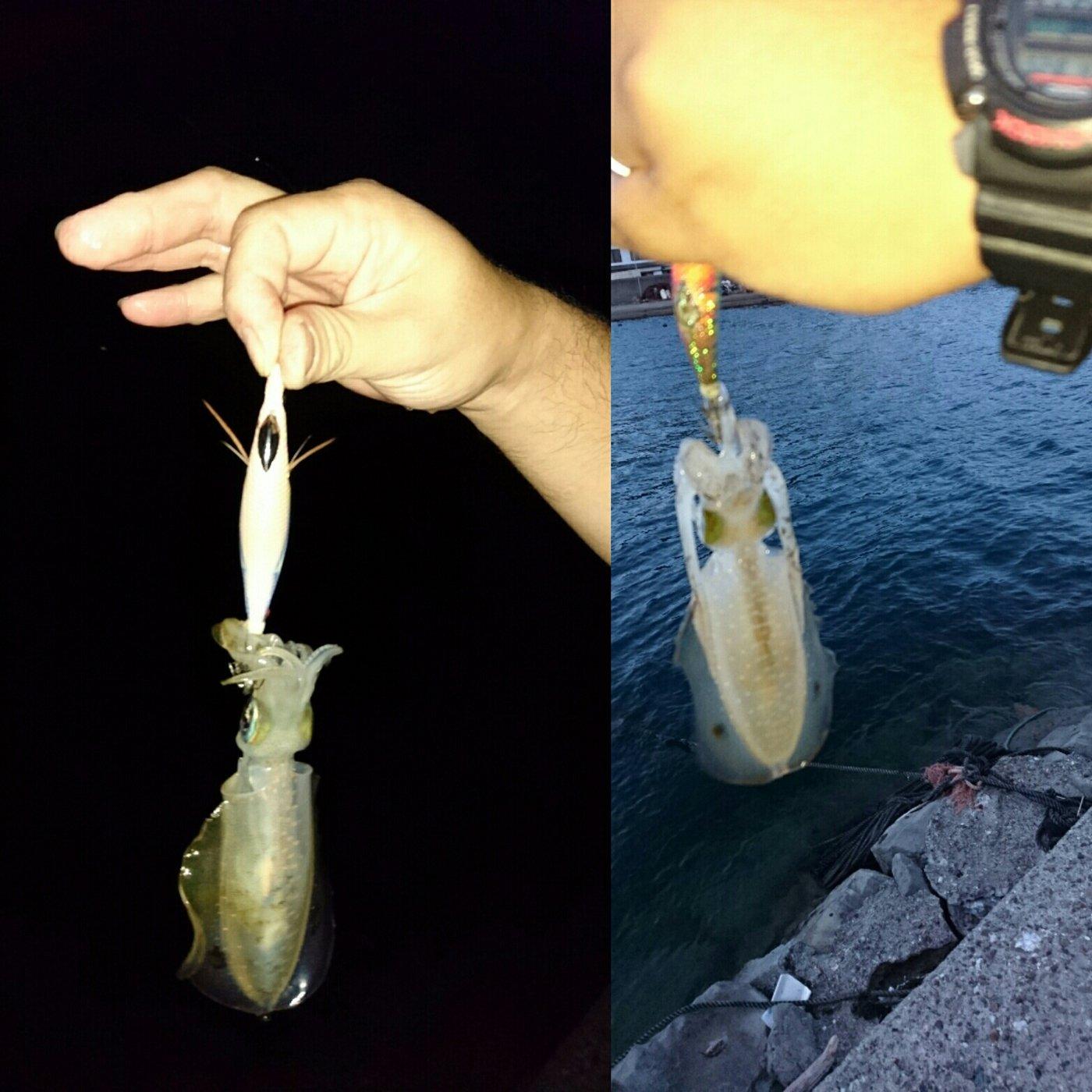 ダイワさんの投稿画像,写っている魚はアオリイカ