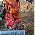 かなぼうさんの北海道室蘭市での釣果写真
