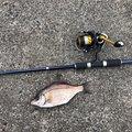 さknさんの愛知県知多郡での釣果写真
