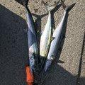 つるりんさんの宮崎県日南市での釣果写真