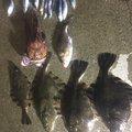 ナカさんの岩手県大船渡市での釣果写真