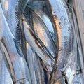 クリリンさんの三重県桑名郡での釣果写真