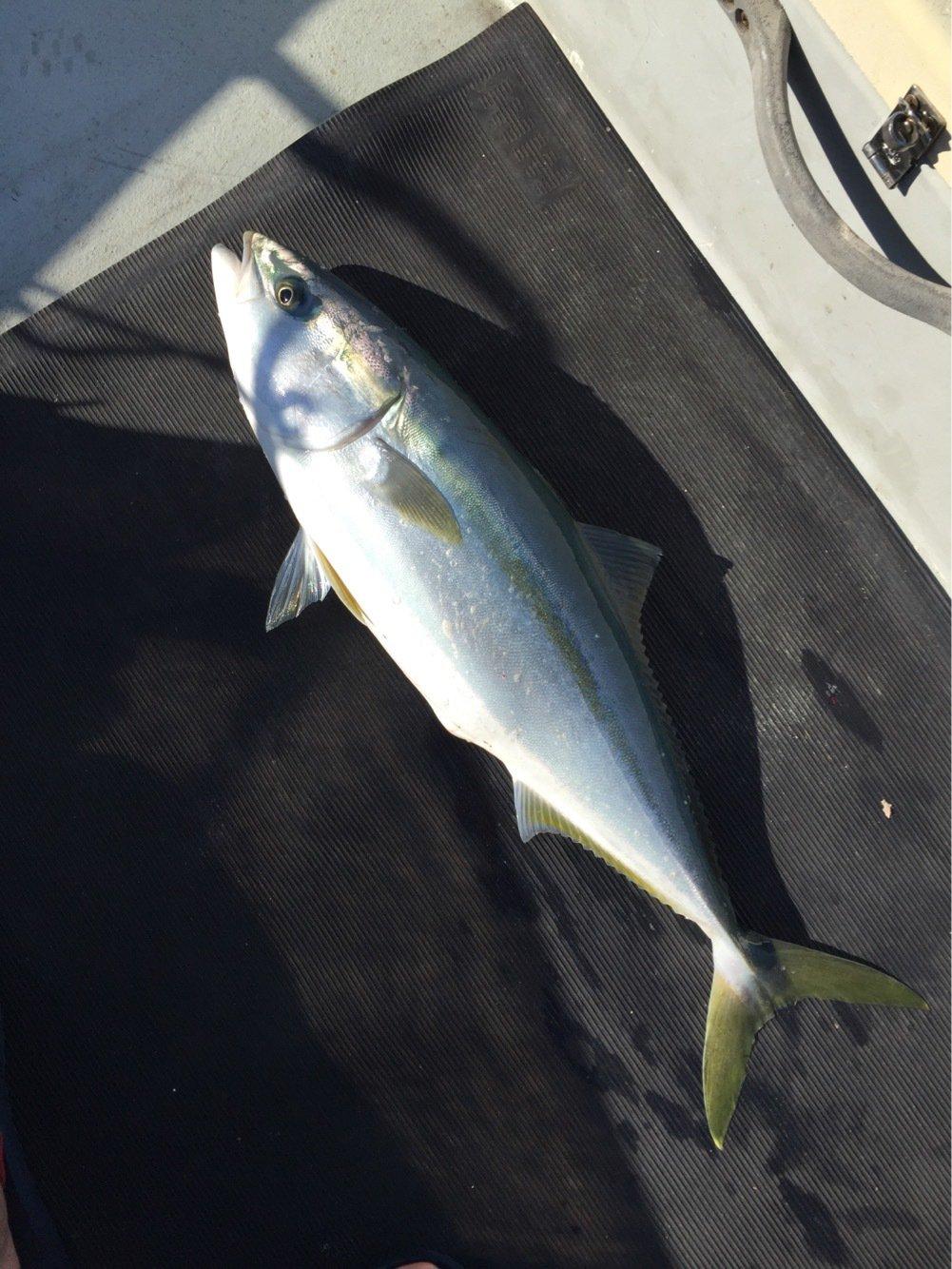 海碧丸さんの投稿画像,写っている魚はワラサ