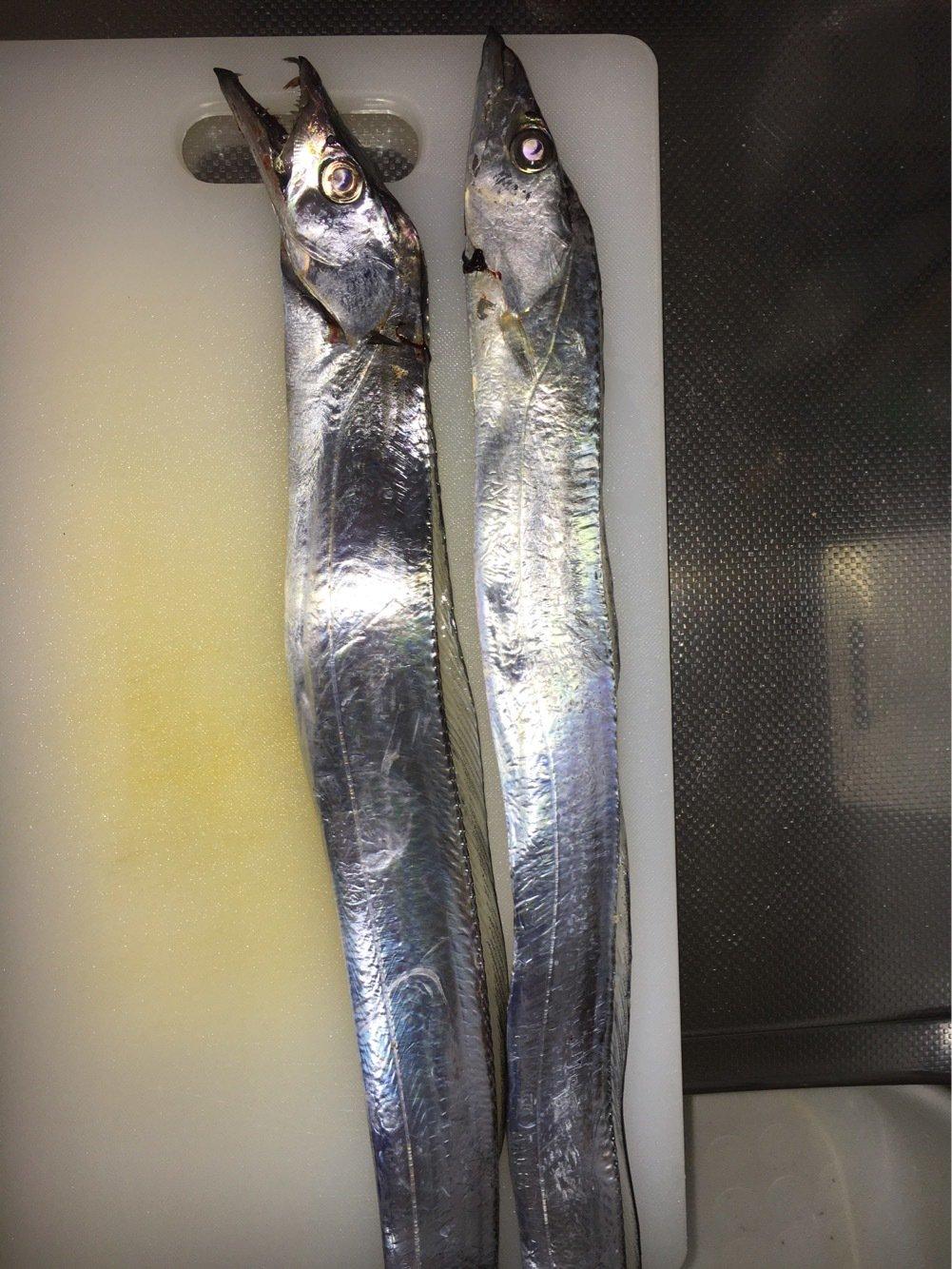 ナオキさんの投稿画像,写っている魚はタチウオ