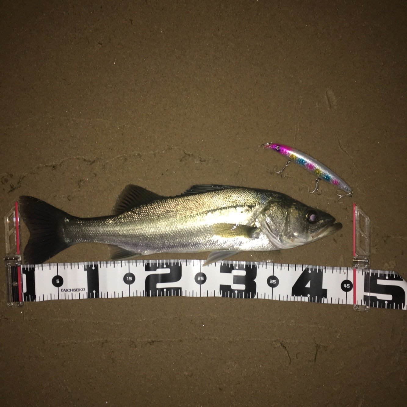 MUSASHi50UPさんの投稿画像,写っている魚はスズキ