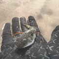 らいをん丸さんの千葉県館山市での釣果写真