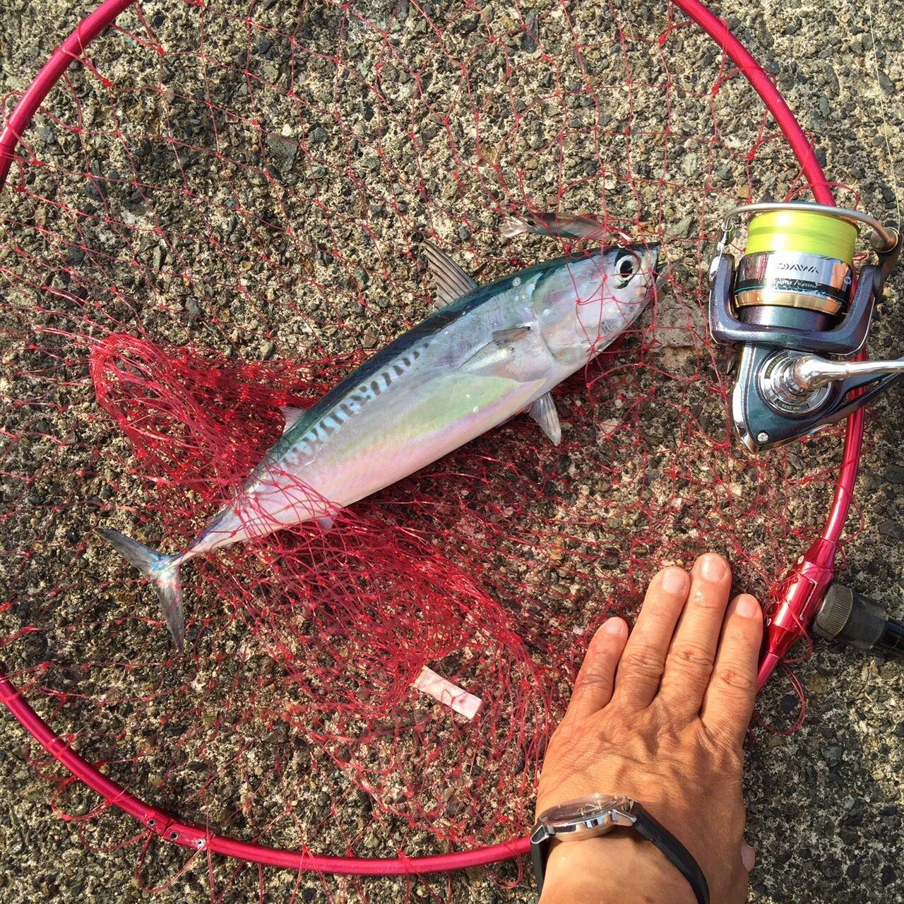 かつてのバスプロさんの投稿画像,写っている魚はマルソウダ