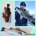 ちんたろうさんの千葉県袖ケ浦市でのスズキの釣果写真