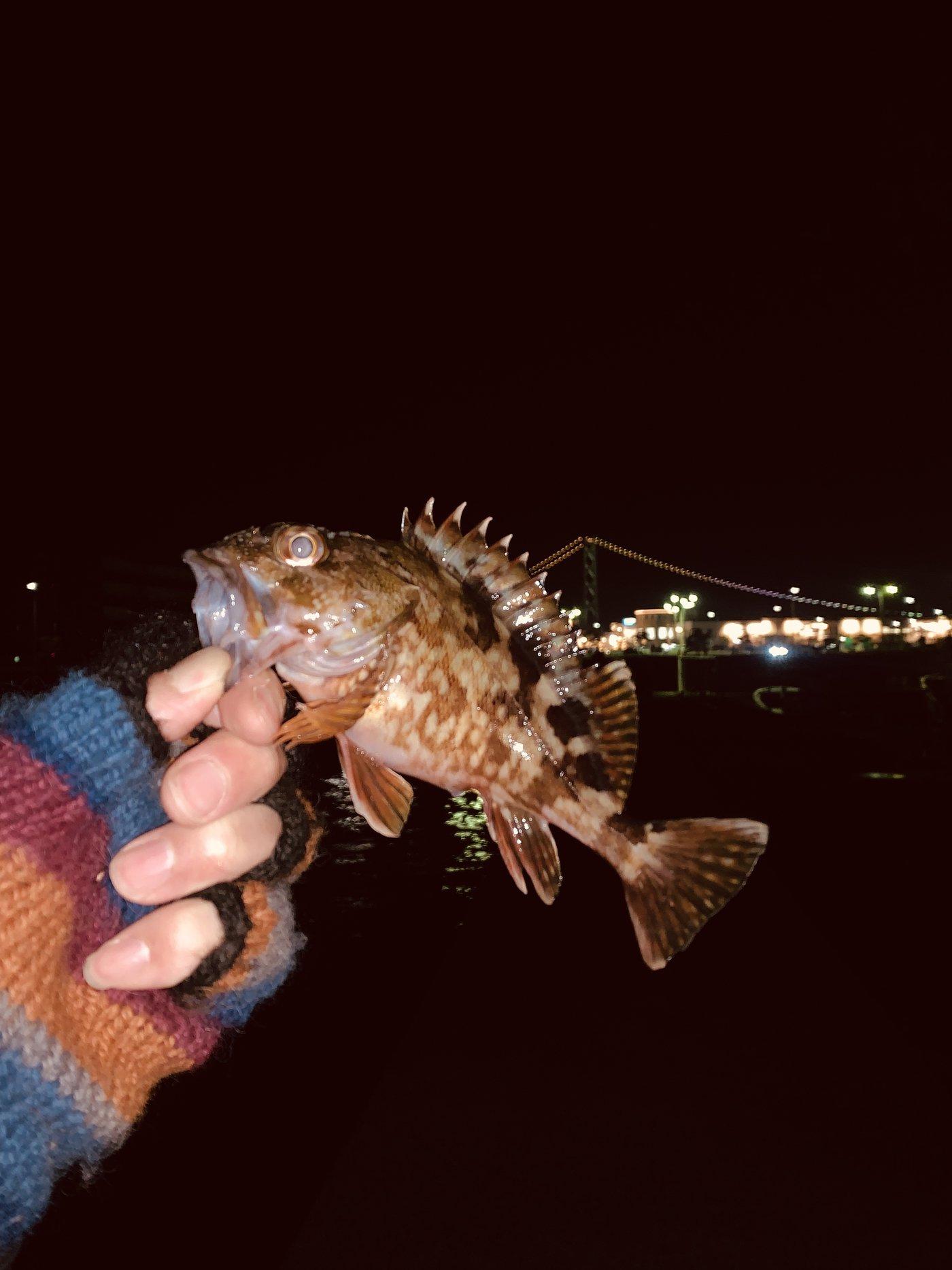 はなぶささんの投稿画像,写っている魚はカサゴ