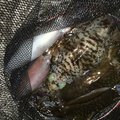 BENさんの大分県佐伯市での釣果写真