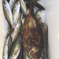 やっすーさんの千葉県南房総市での釣果写真