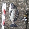 kairi218さんの鳥取県での釣果写真