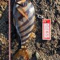 yowthさんの静岡県沼津市での釣果写真