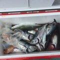相馬一さんの三重県員弁郡での釣果写真