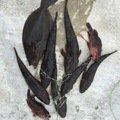 はたかつさんの三重県四日市市でのヒラメの釣果写真