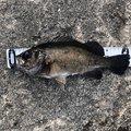 あんどうさんの大分県津久見市での釣果写真