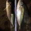 ユージンさんの和歌山県御坊市での釣果写真