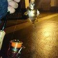 大和さんの静岡県袋井市での釣果写真