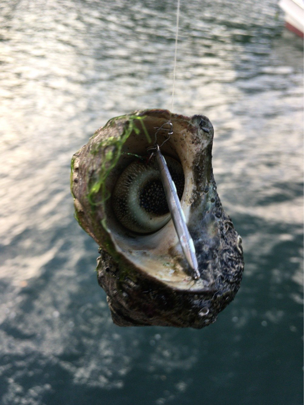 釣りでもしようさんの投稿画像,写っている魚は