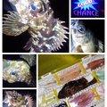 KRO さんの静岡県沼津市での釣果写真