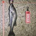 nagix64さんの兵庫県尼崎市での釣果写真